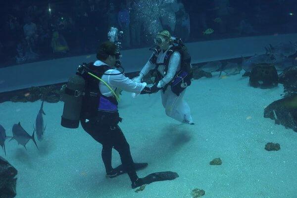 Couple gets married in underwater aquarium full of sharks!